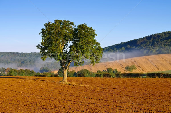 Paysage matin brouillard France maison arbre Photo stock © LianeM