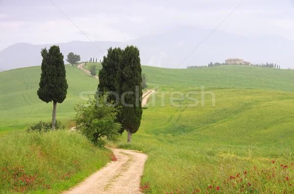 Toskania cyprys drzew utwór domu drzewo Zdjęcia stock © LianeM