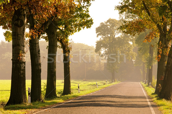 avenue in fall 15 Stock photo © LianeM