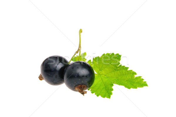 Stock photo: black currant isolated 04