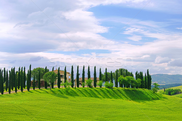 17 cielo panorama alberi blu Foto d'archivio © LianeM