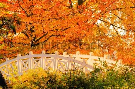 English Grounds of Woerlitz White Bridge 01 Stock photo © LianeM