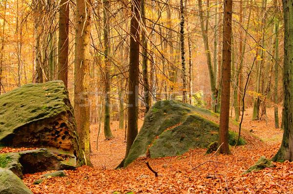 Arenito rocha floresta paisagem folha folhas Foto stock © LianeM