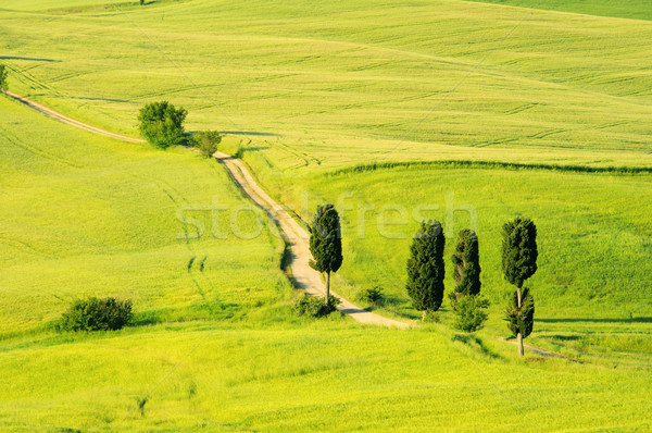 22 árvore primavera estrada natureza campo Foto stock © LianeM