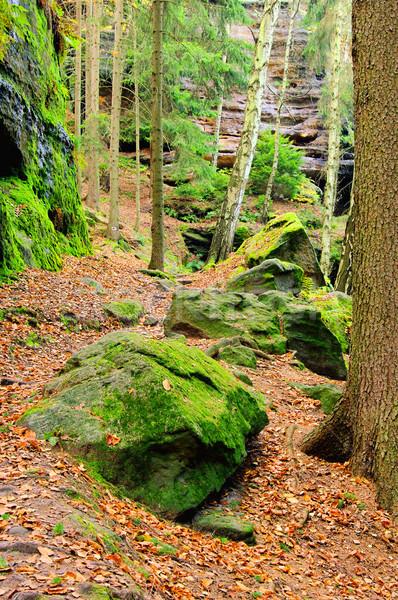 sandstone rock in forest 23 Stock photo © LianeM