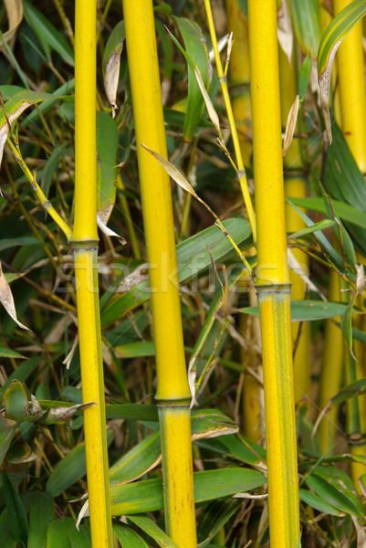 Bambusa 22 liści ramki zielone roślin Zdjęcia stock © LianeM