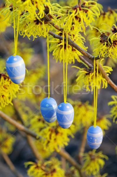кустарник Пасху время цветок саду яйцо Сток-фото © LianeM