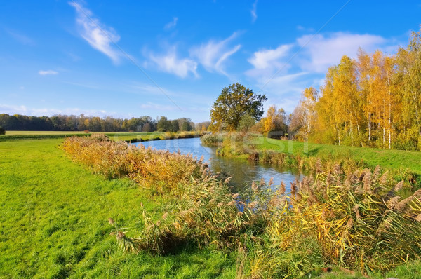 Spree Forest in fall Stock photo © LianeM