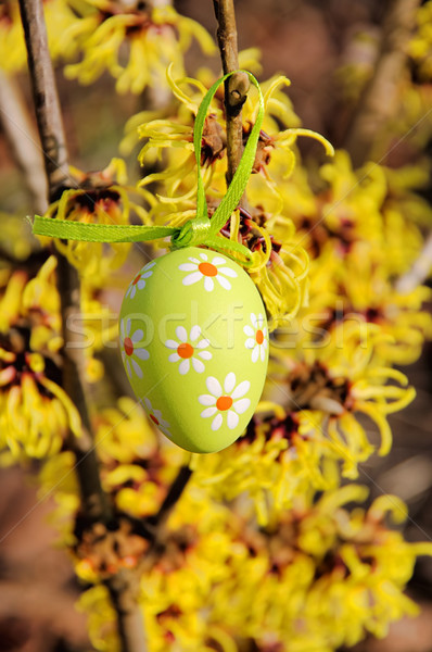 Arbusto Pasqua tempo fiore giardino uovo Foto d'archivio © LianeM