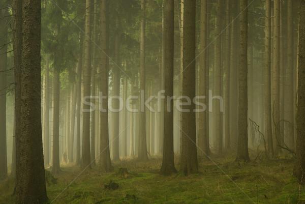 лес тумана деревья зеленый осень осень Сток-фото © LianeM