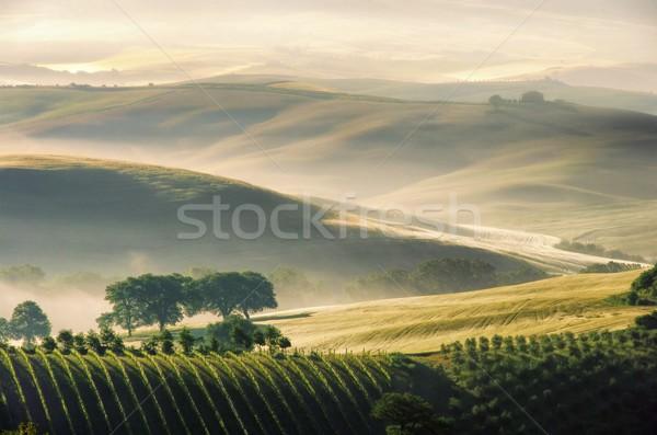 Toskana tepeler ev ağaç çim doğa Stok fotoğraf © LianeM