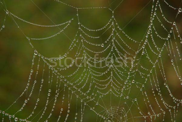 Spinneweb ontwerp groene najaar spin drop Stockfoto © LianeM