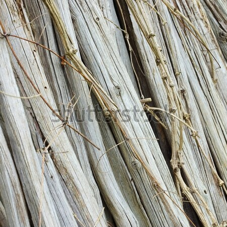 dry stems  Stock photo © LianeM