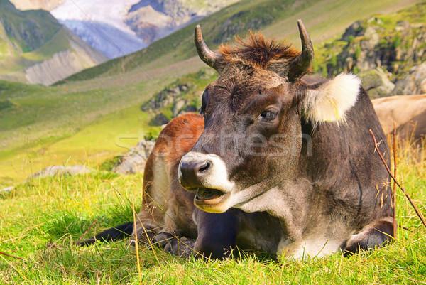 Vaca hierba naturaleza paisaje nieve campo Foto stock © LianeM