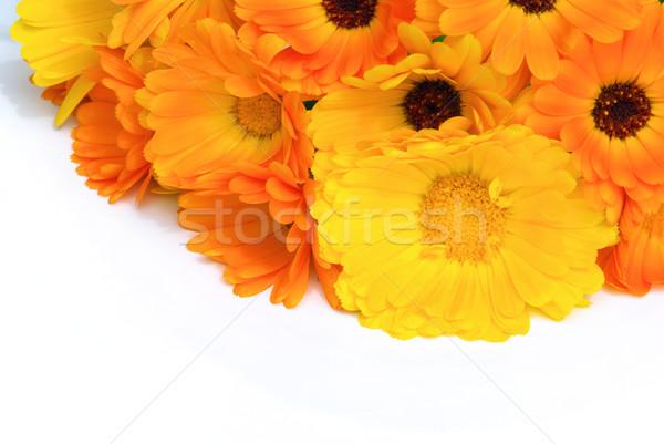 22 kwiaty ogród bed biały bukiet Zdjęcia stock © LianeM