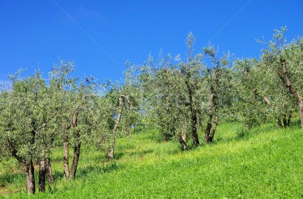 Toskana gökyüzü ağaç ahşap doğa Stok fotoğraf © LianeM