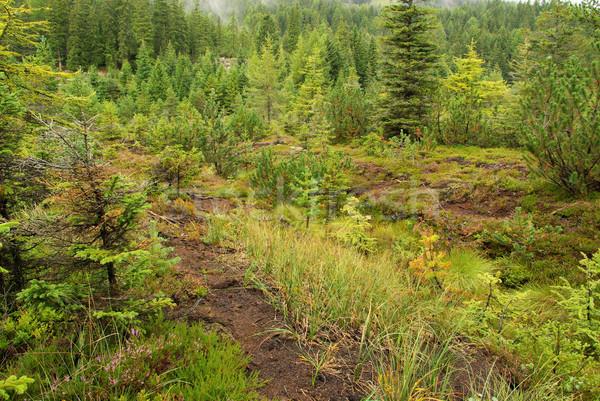 Moeras 15 boom landschap berg groene Stockfoto © LianeM