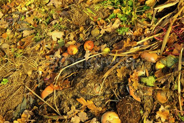 13 コンテナ 土壌 ストックフォト © LianeM