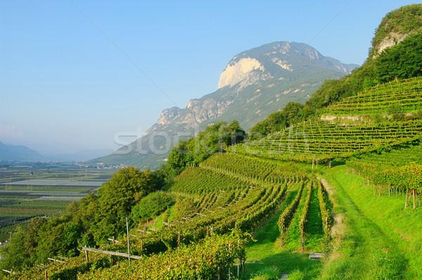 Trentino 03 Stock photo © LianeM