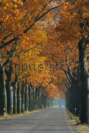 avenue in fall 06 Stock photo © LianeM