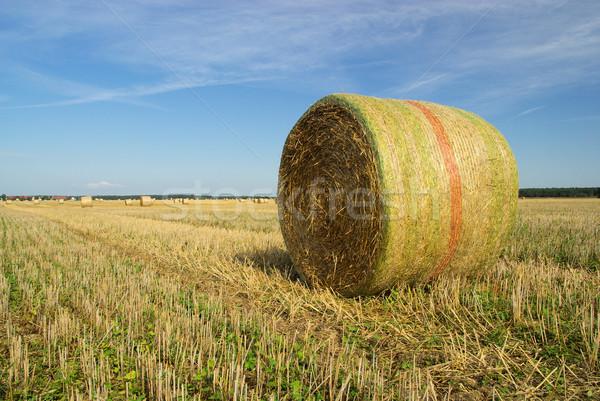 Bale paglia 26 Foto d'archivio © LianeM