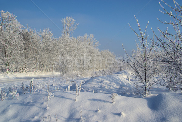 Stockfoto: Bos · winter · 18 · veld