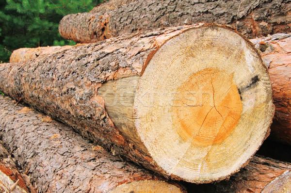 Holzstapel - stack of wood 32 Stock photo © LianeM