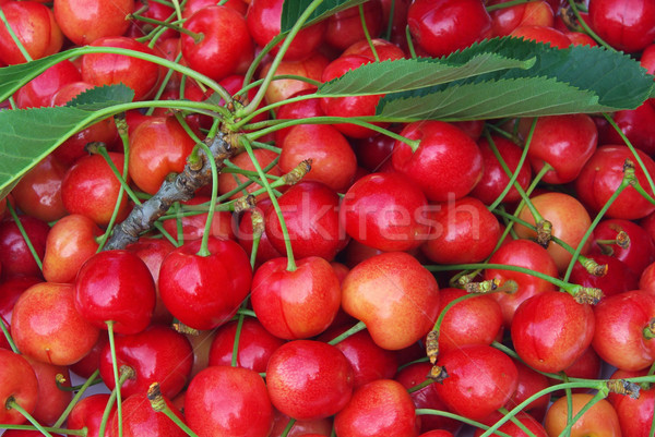 Photo stock: Cerise · 16 · feuille · vert · rouge · cerises