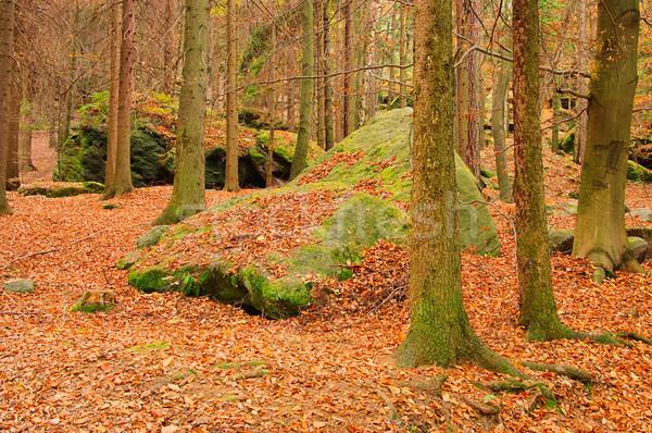 Kumtaşı kaya orman manzara yaprak yaprakları Stok fotoğraf © LianeM