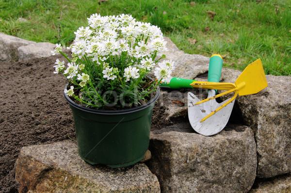 shrub planting 04 Stock photo © LianeM