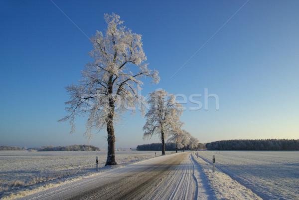 hoarfrost road 03 Stock photo © LianeM