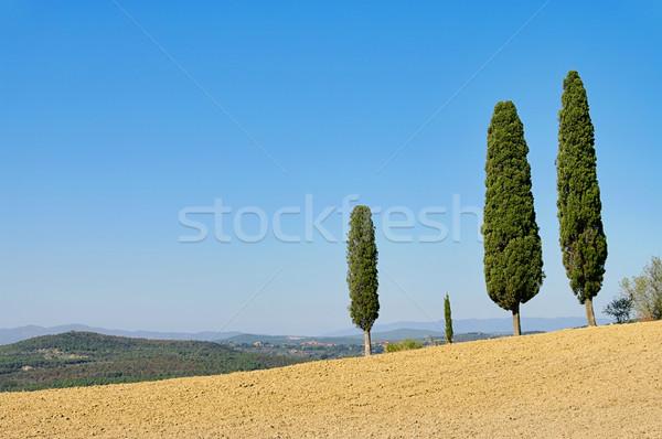 Toskania cyprys niebo krajobraz drzew lata Zdjęcia stock © LianeM
