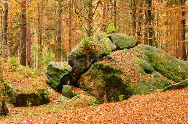 Zandsteen rock bos 17 landschap blad Stockfoto © LianeM