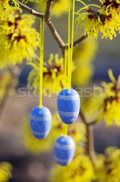 Krzew Wielkanoc czasu kwiat ogród jaj Zdjęcia stock © LianeM