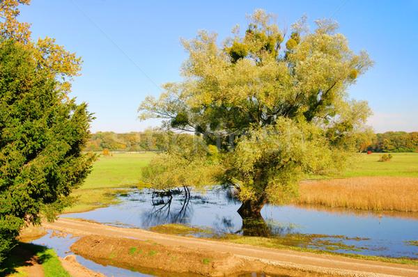 English Grounds of Woerlitz willow tree 02 Stock photo © LianeM