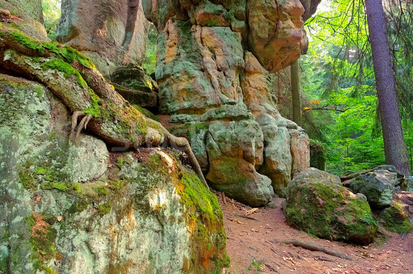 rocks in Stolowe Mountains in Silesia Stock photo © LianeM