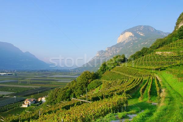 Trentino 02 Stock photo © LianeM