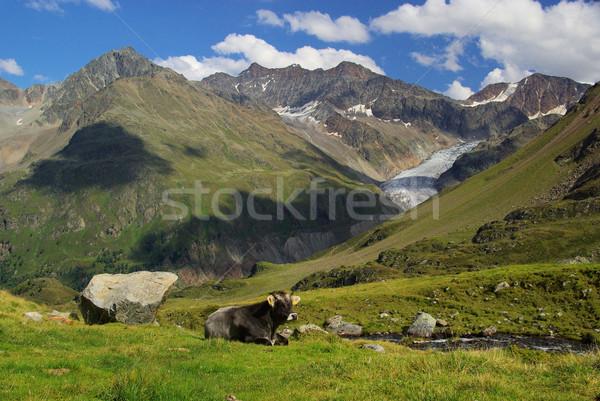 alp cow 12 Stock photo © LianeM