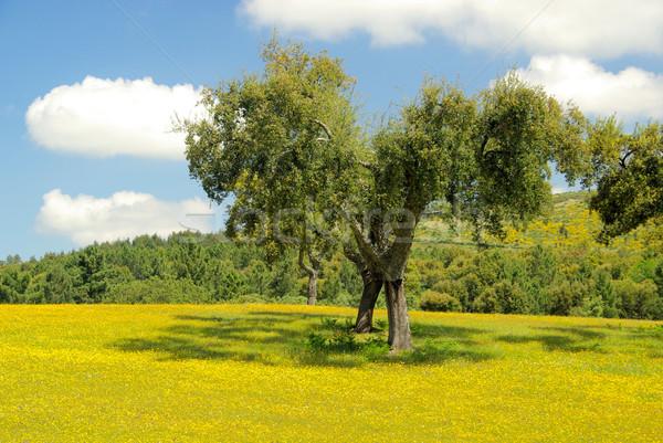 meadow and cork oaks 28 Stock photo © LianeM