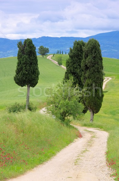 Tuscany cypress trees with track 02 Stock photo © LianeM