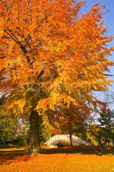 английский белый моста 18 дерево лист Сток-фото © LianeM