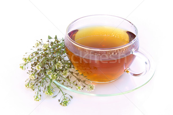 tea yarrow 03 Stock photo © LianeM