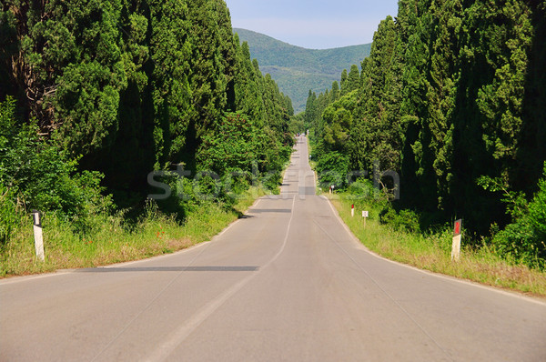 cypress avenue longest from Italy 02 Stock photo © LianeM