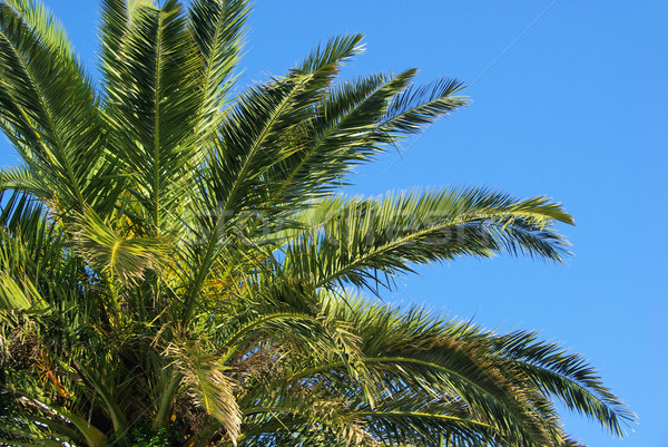 канарейка острове дата Palm природы лет Сток-фото © LianeM