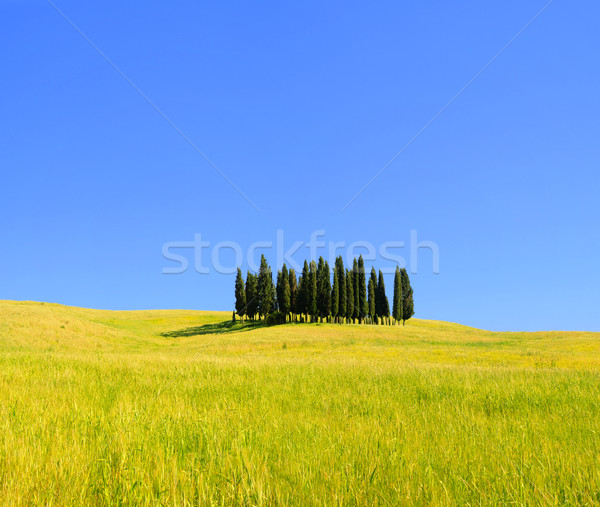 Tuscany forest 06 Stock photo © LianeM