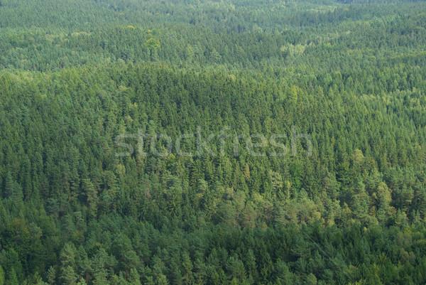 Lucfenyő erdő fa tájkép keret Stock fotó © LianeM