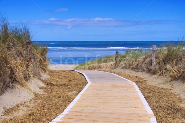 Wydma utwór wody morza zielone piasku Zdjęcia stock © LianeM