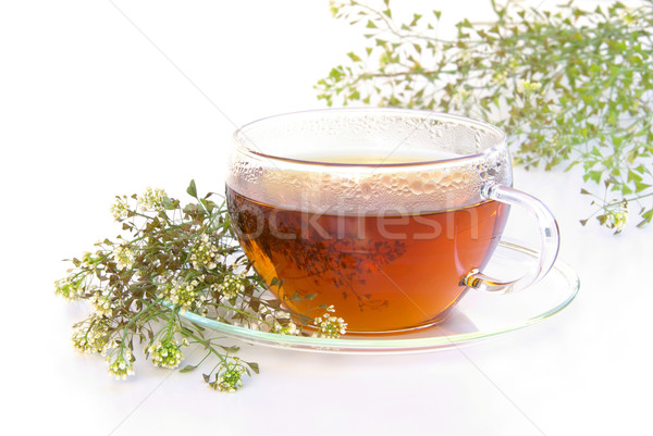 tea yarrow 04 Stock photo © LianeM