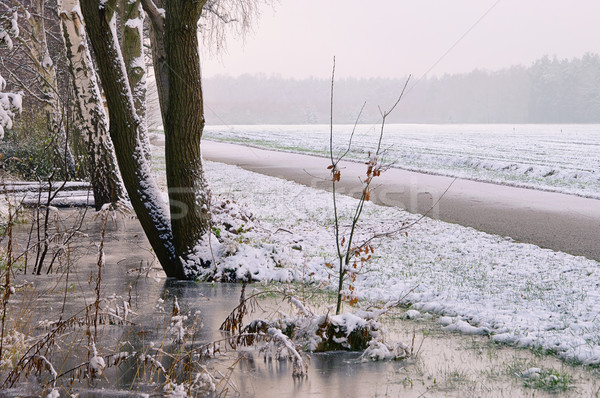 water ditch in winter 02 Stock photo © LianeM
