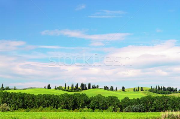 Ciprés cielo árbol árboles azul maíz Foto stock © LianeM